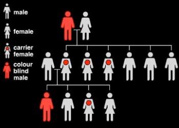 Gen Pembawa Kelainan buta warna